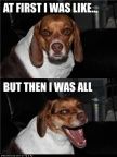 funny-dog-pictures-at-first-i-was-like