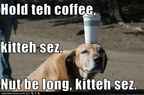 funny-dog-pictures-coffee-kitteh