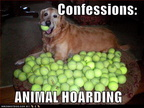 funny-dog-pictures-confessions-animal-hoarding