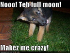 funny-dog-pictures-werewolf-dog-goes-crazy-in-your-yard